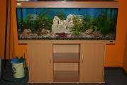 Aquarium 20.10.07 018 (Large).JPG