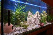 Aquarium 20.10.07 029 (Large).JPG