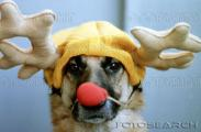 hund-rudolph-kostuem-~-bxp40834.jpg