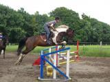 pferde 097.jpg