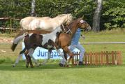 Fohlenchampionat Bad Segeberg Jolie 2008 001.jpg