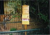 2003 Tiger Puhdy im Zoo Aschersleben.jpg