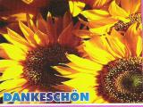 Dankeschönsonnenblume.jpg