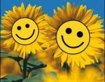 2 Sonnenblumen .jpg