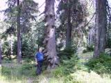 Harz September 2008 (30).JPG