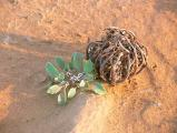 Wuestenpflanze2.jpg