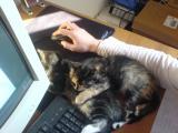 Purzel un Leyla auf Olis MousePad II.JPG