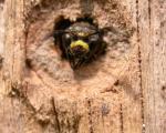 Eumenidae_DSCN4420.jpg