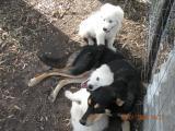 puppies 084.jpg