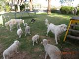 puppies 219.jpg