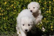 puppies im gruenen.jpg
