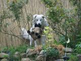 Bella mit Schaf.jpg