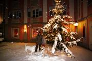 Weihnachten_2010-06.JPG