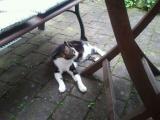 Frieda geht das erste Mal in ihren Garten (1).JPG