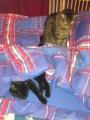 Lena mit neuem Partner schon im Bett.png
