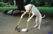 Srpski pas na ulicu.jpg