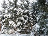 winter 2010 035 (640x480).jpg