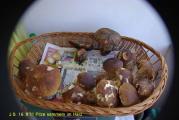 16.9.11 Pilze sammeln im Harz (8).JPG