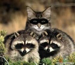 racoons.jpg
