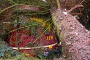 Baum auf My 1129.JPG