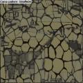 WoWP_Doc-Skins_FirstRelease_CamoPattern-Giraffe04_american-plane-set.png