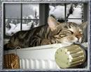 Winterzeit - Mau-Mau auf der Ofenbank.jpg