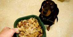 hundefutter-unsicherheit-beim-hundefutter-schmecken-soll-es-und-gesund-sein-foto-imago-.jpg