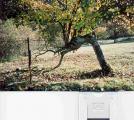 Bäume0002.jpg