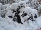 Schneestrella.jpg