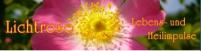 lichtrose.png