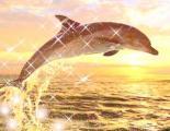 delfin3.jpg
