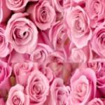 rosen rose