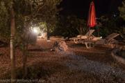 Garten3-6799.jpg