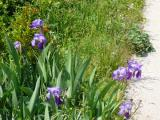 Blumen-an-Strasse.jpg