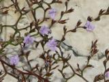 Blumen-09-02.jpg