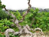 Kroatien 2012 433.JPG
