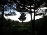 Kroatien Zaostrog 2008 068.jpg