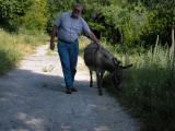Kroatien Zaostrog 2008 019.jpg