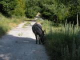 Kroatien Zaostrog 2008 018.jpg