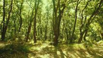 schwarzwald_2.jpg