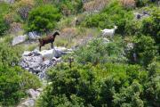 Kopie von Korcula2010 240.jpg