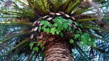 palme1496.jpg
