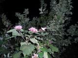 2010 09 11_0047.JPG