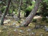 Kroatien 2011 Insel Brac 265.JPG