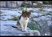 Katze+1,5_0_-1,5_tonemapped.jpg