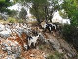 Kroatien 2012 381.JPG