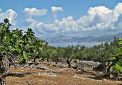 Kroatien 2011 Insel Brac 149.JPG