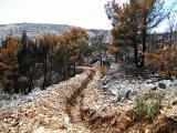 Kroatien 2011 Insel Brac 370.JPG