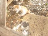 sweetcat1.jpg