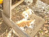 sweetcat2.jpg